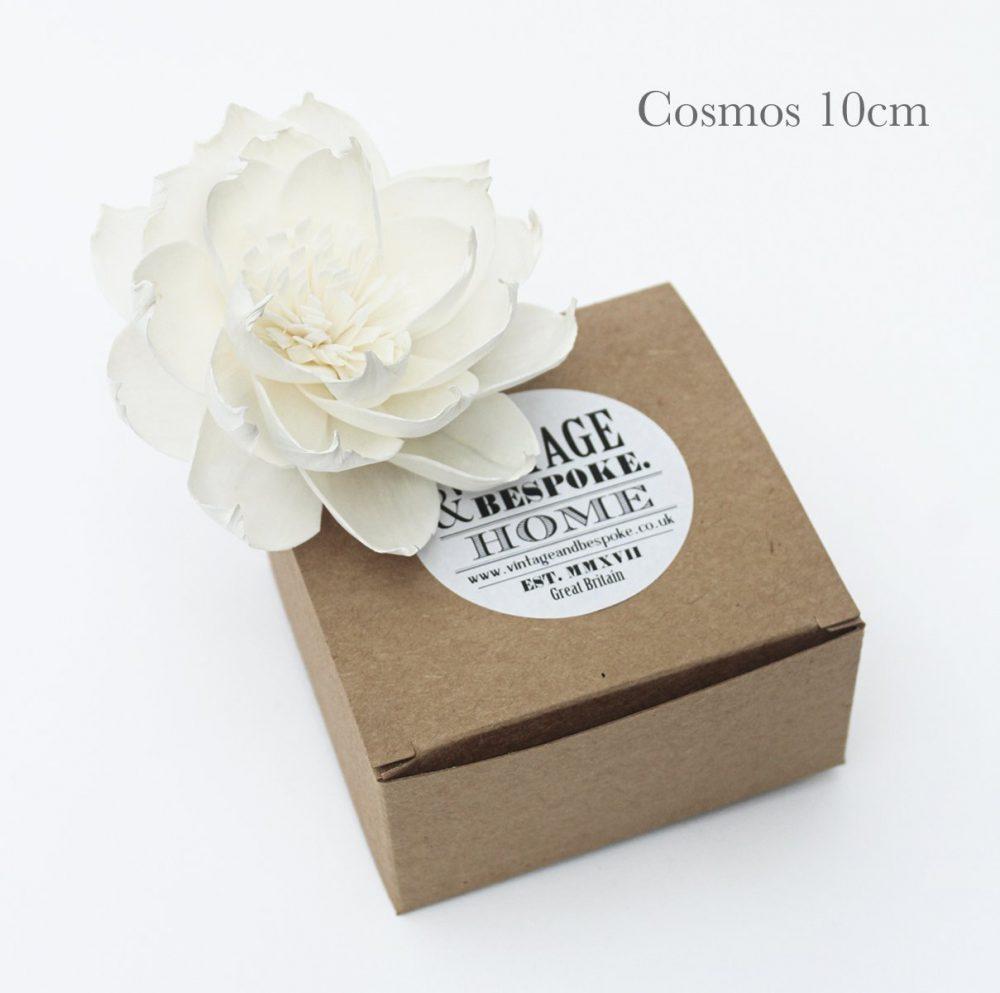 cosmos 10cm